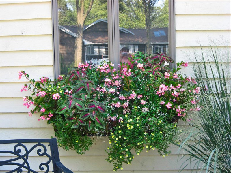 Modern decoration with flowers for the outside wall and the window of the house