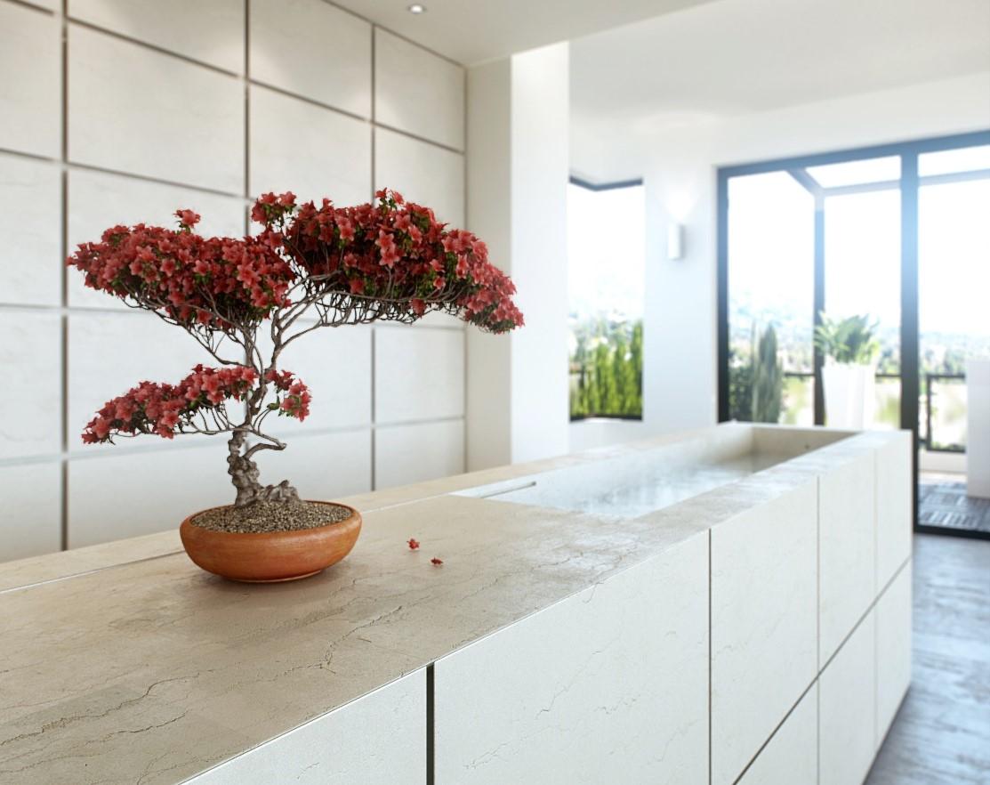 Conseil d'entretien du votre bonsaï d'intérieur: gardez-le dans un endroit ensoleillé.