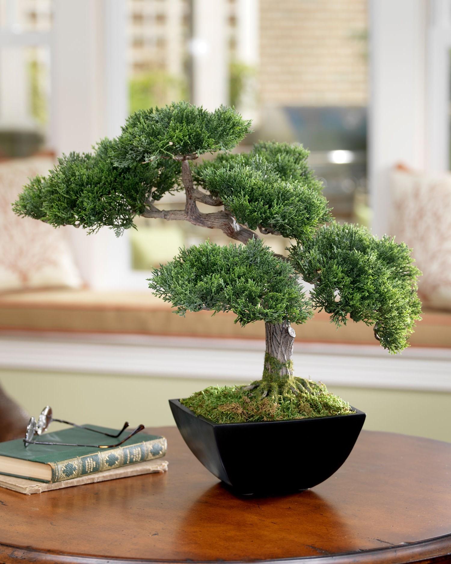 L'art du bonsaï est originaire du Japon et de la Chine où il est pratiqué depuis des siècles.