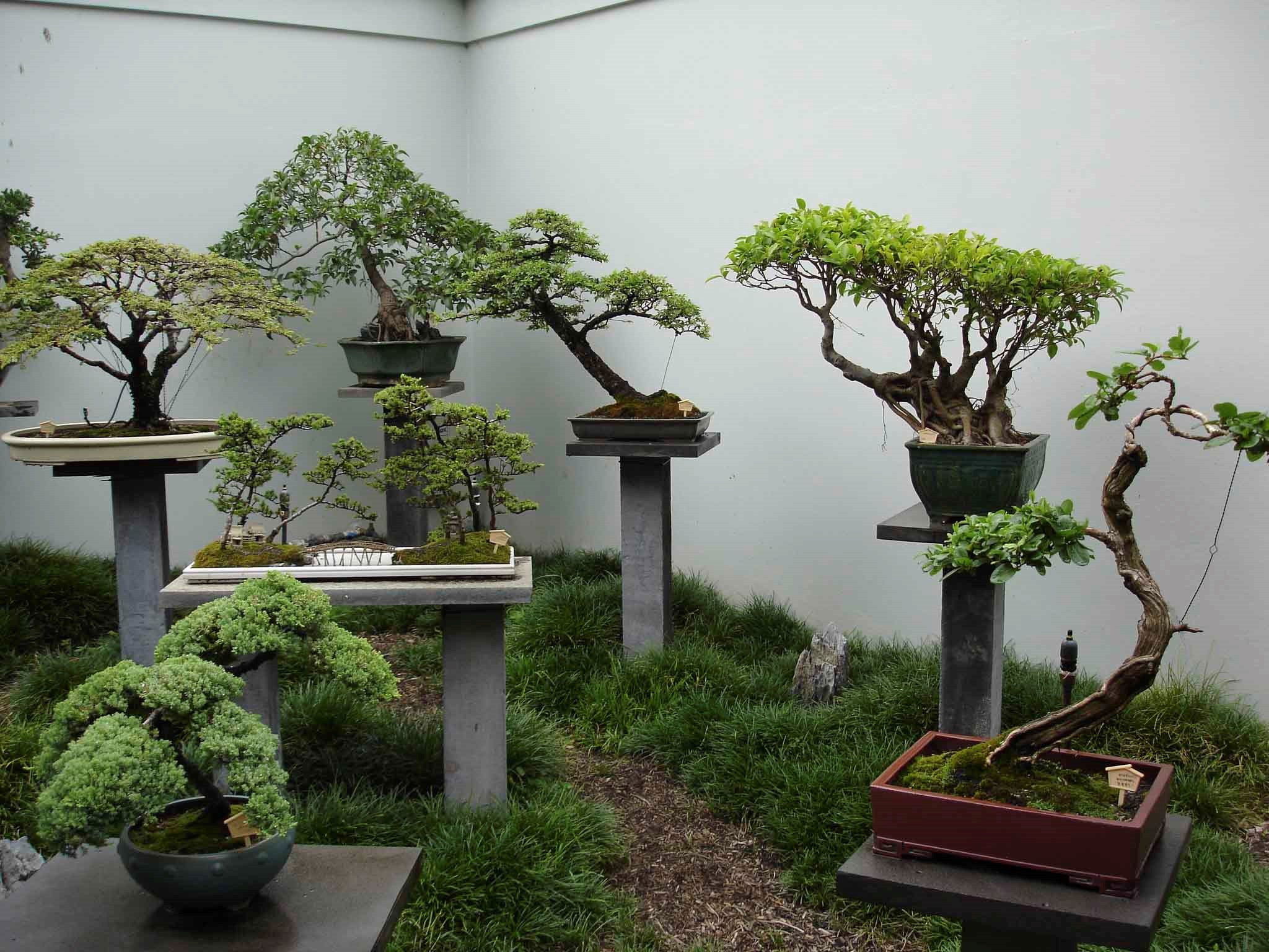 L'art du bonsaï a été diffusé par des moines bouddhistes qui souhaitaient faire entrer la nature à l'intérieur de leurs temples.