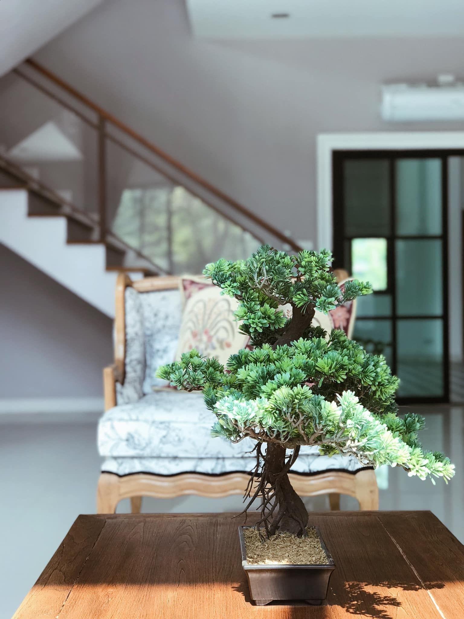 Les Chinois avaient aussi une passion pour les jardins. En fait, beaucoup de ces jardins étaient à l'échelle et comprenaient de nombreux arbres et arbustes miniatures.