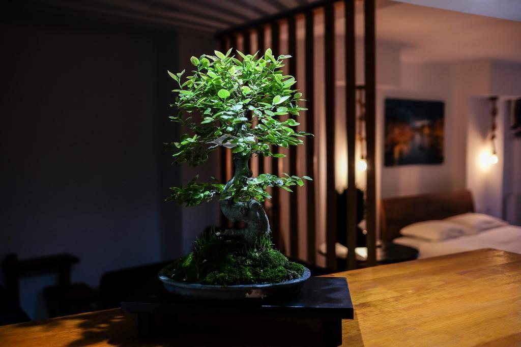 Bonsaï signifie littéralement «arbre dans un plateau».