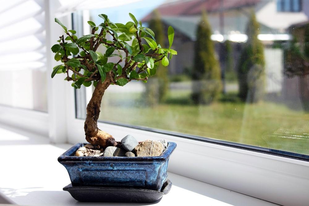 L'arbre et le pot doivent former une seule entité.