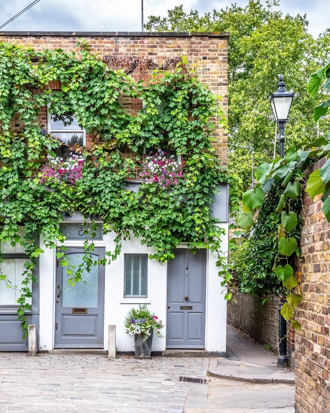 Les plantes de vigne sont spectaculaires comme décor pour votre façade.