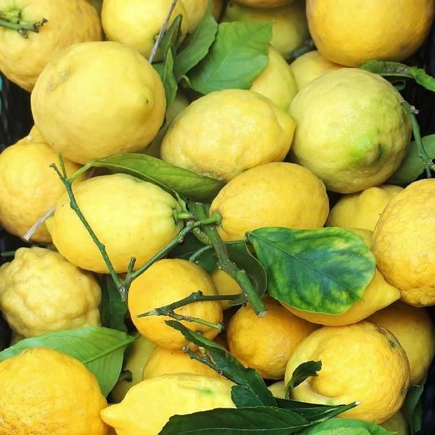 Ils produisent beaucoup de fruits, mais ils ne deviendront pas si gros qu'il serait impossible de les déplacer.