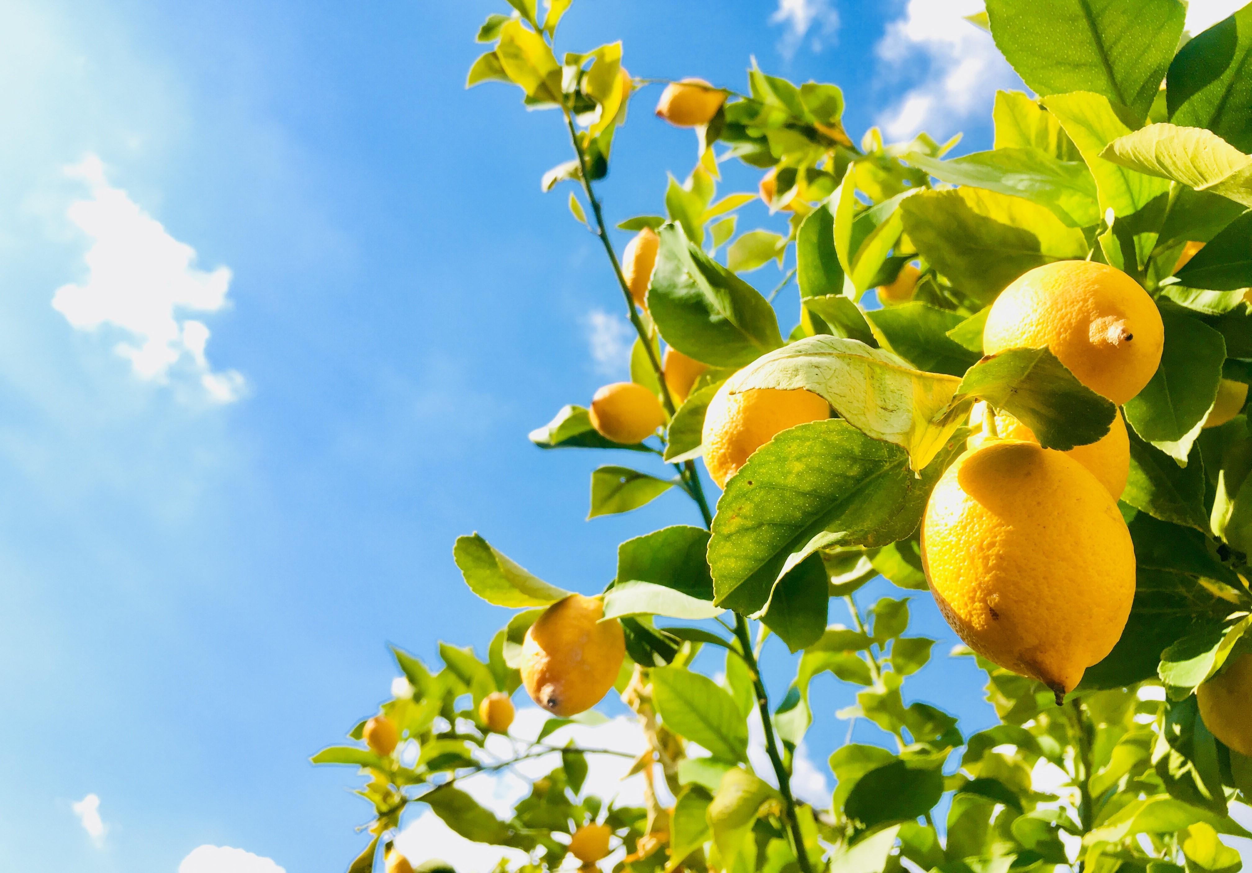 Pendant les mois d'été, les arbres peuvent atteindre des températures supérieures à 21 ° C le jour, car les températures se refroidissent la nuit.