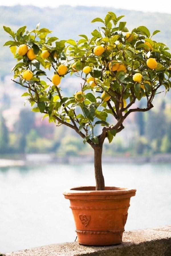 Évitez de le placer quelque part où il sera bloqué du soleil par d'autres plantes.