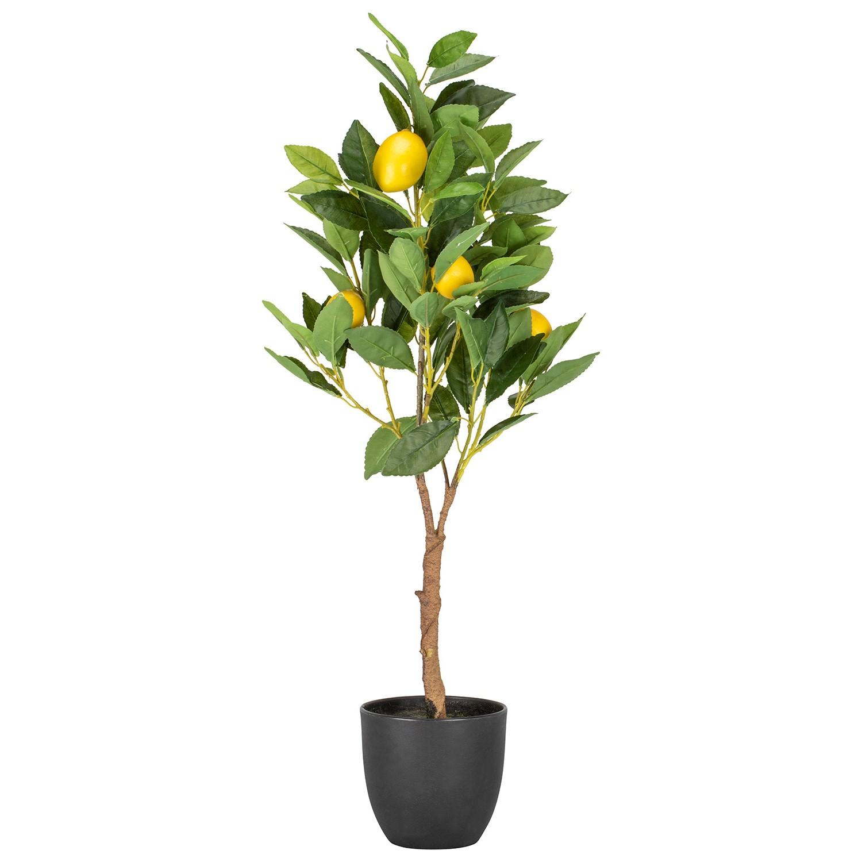 Si vous vivez dans un climat très nuageux et sombre, investissez dans une lumière horticole pour maintenir l'arbre en bonne santé pendant les 4 saisons.