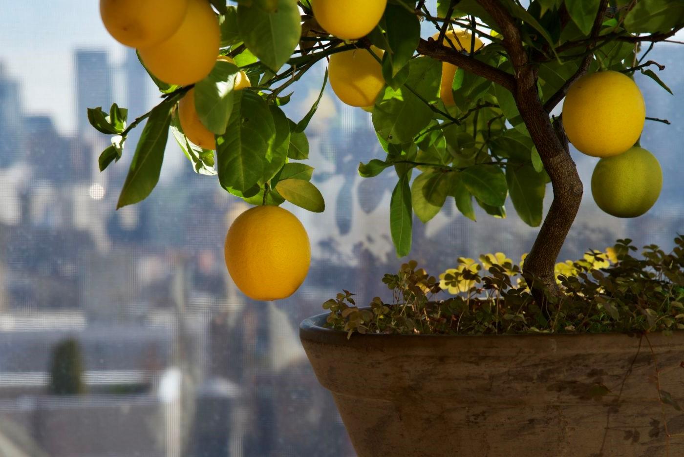 La circulation d'air aidera à garder l'arbre en bonne santé.