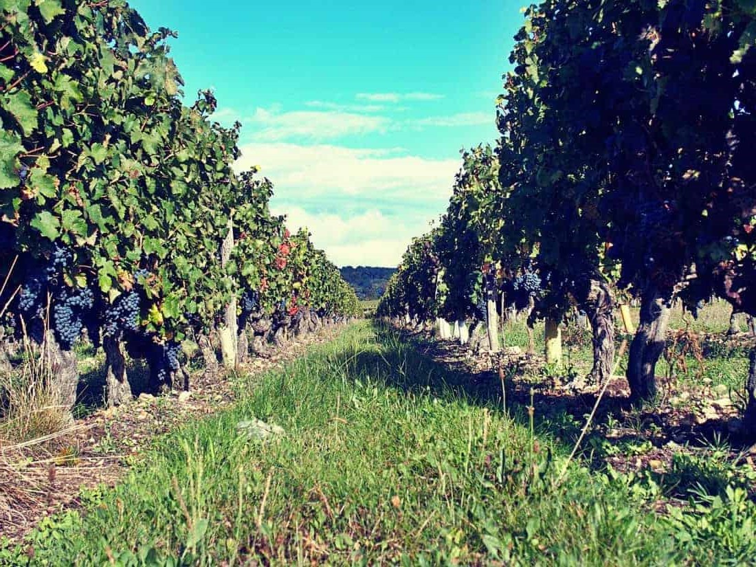 Il commence généralement dans les régions les plus chaudes du pays, en Corse et en Provence.