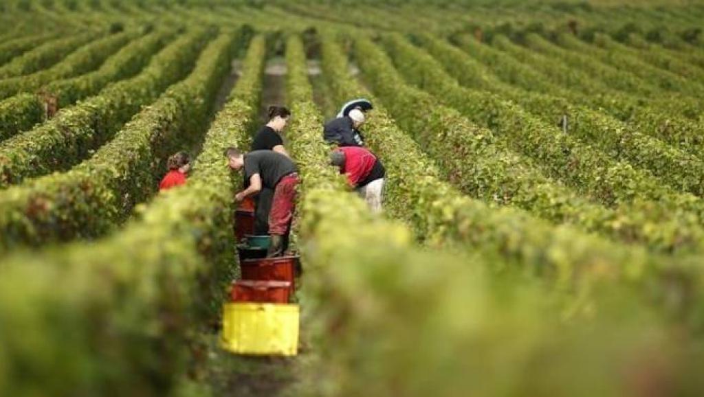 La France cultive plus de 3000 types de raisins différents.