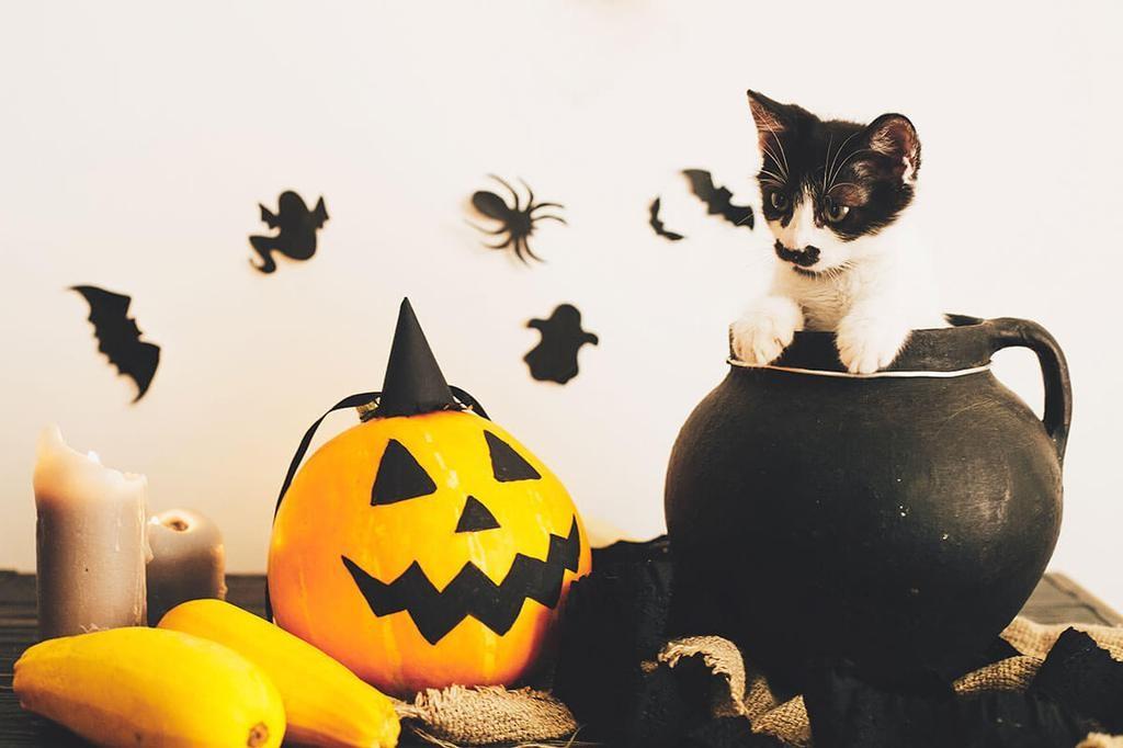 Les jeunes femmes croyaient pouvoir, lors de l'Halloween, deviner le nom ou l'apparence de leur futur mari.