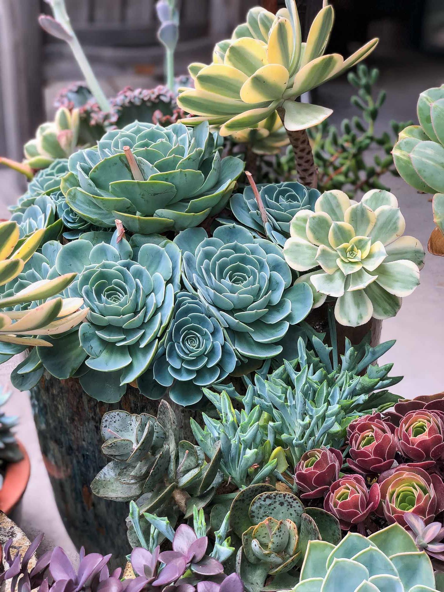 Personne ne peut résister à la beauté de ces plantes