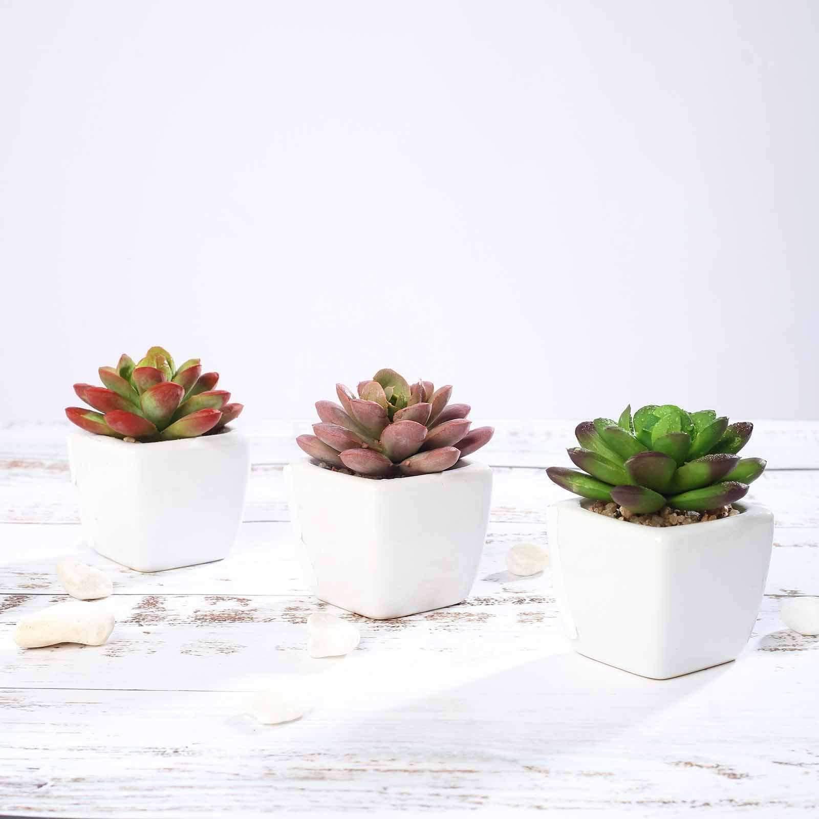 Vous pouvez aussi décorer votre maison avec ces petites Echeverias
