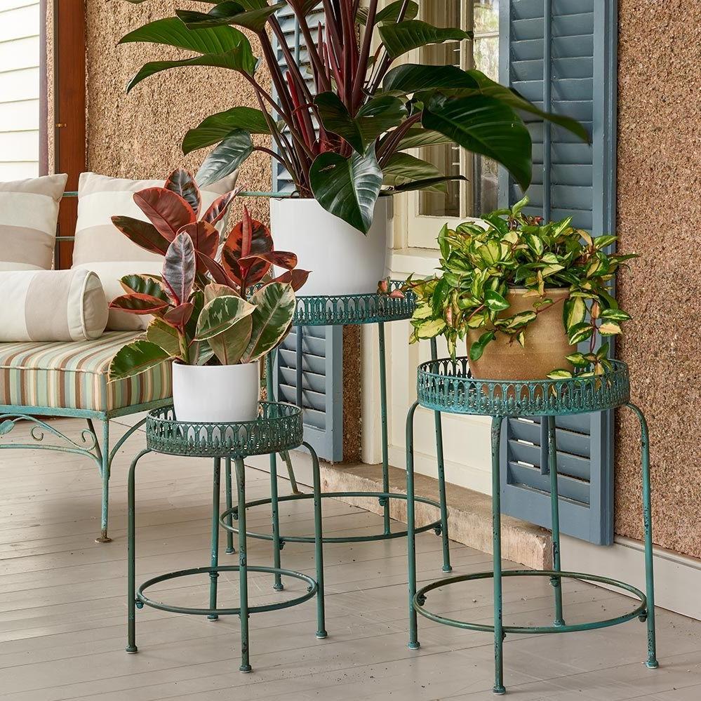 Voici quelques conseils pour embellir votre maison avec des plantes pour la véranda.