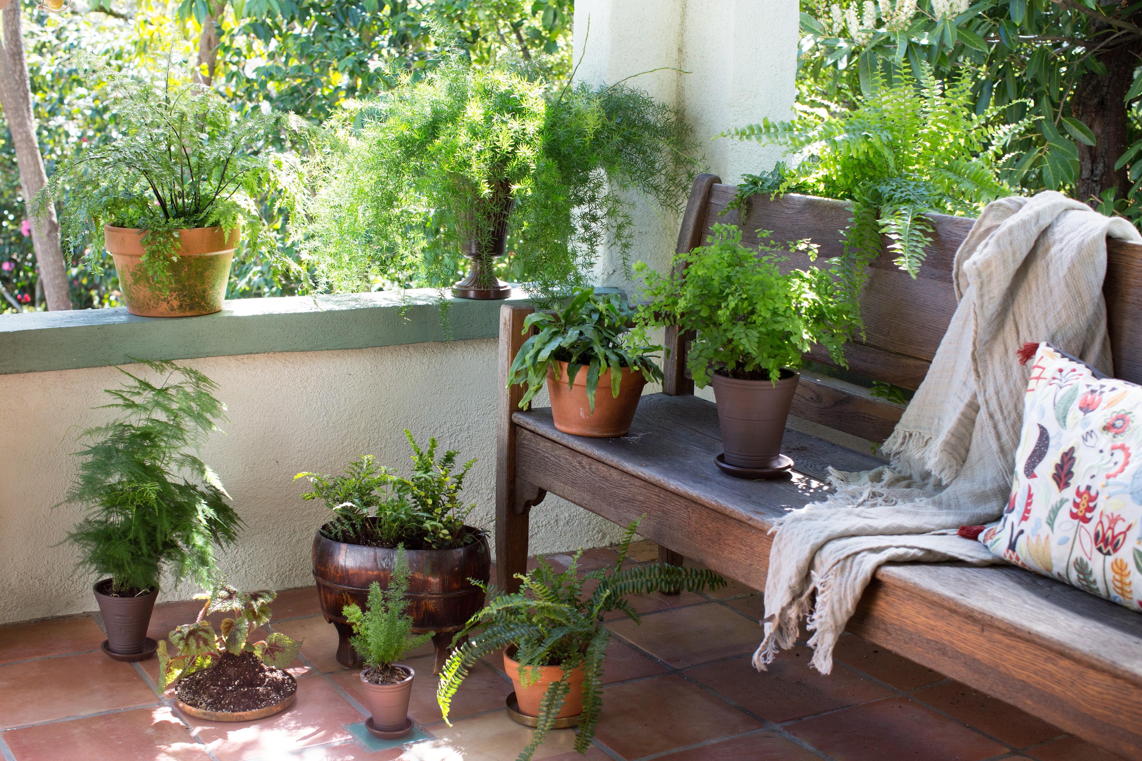 Si votre véranda n'est pas ensoleillée, choisissez certaines de ces plantes.