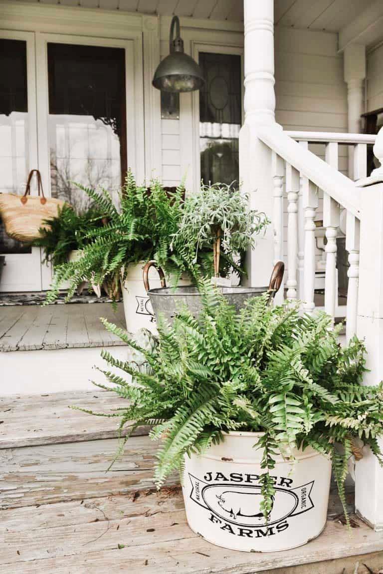 À l'approche de l'automne et de l'hiver, voici quelques conseils utiles pour vos plantes pour la véranda.