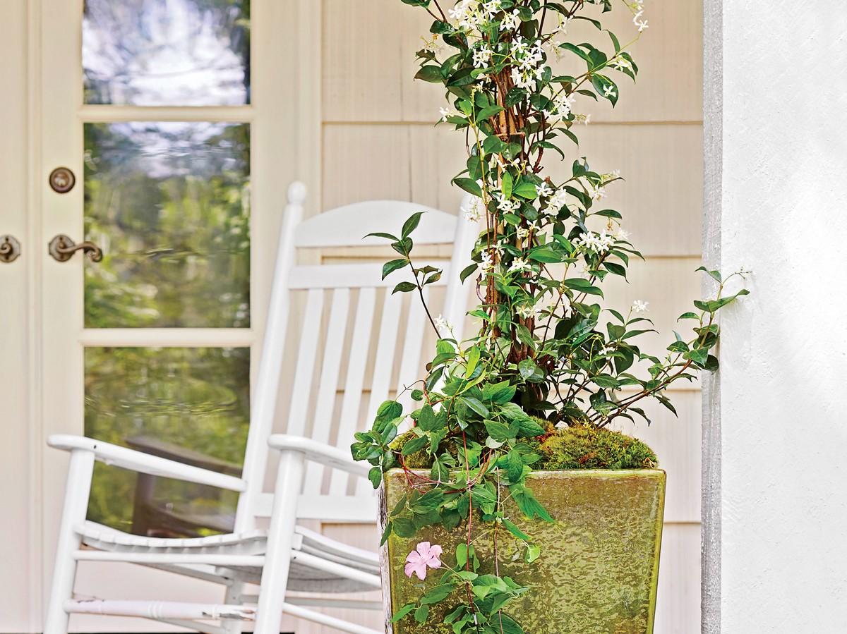 Utilisez des treillis pour les plantes grimpantes.