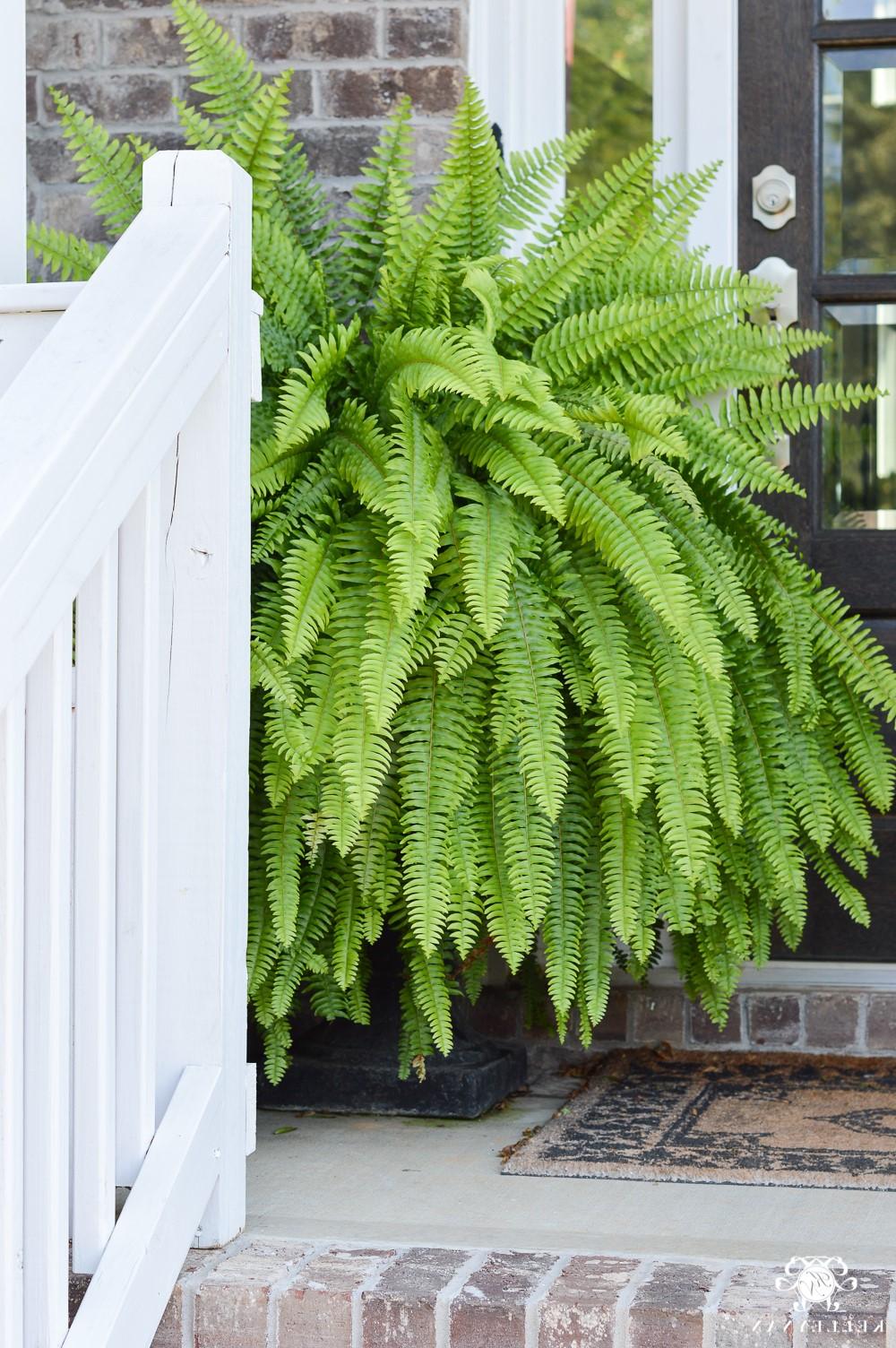 La température plus froide et le mauvais temps peuvent faire des ravages dans votre jardin.