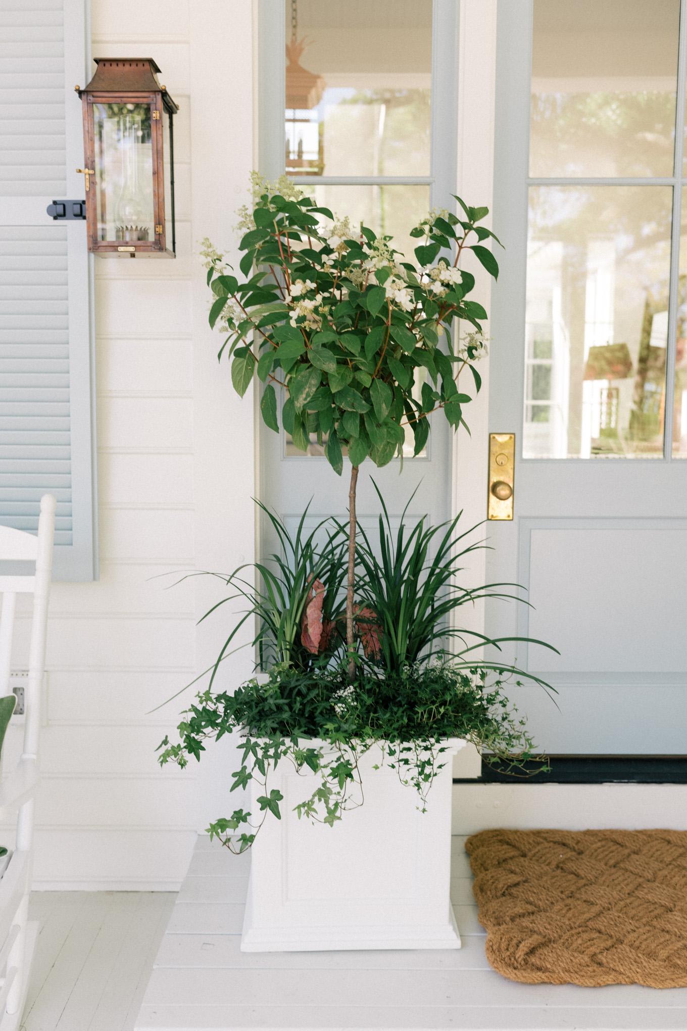Les fleurs annuelles, les plantes et les légumes doivent être coupés.