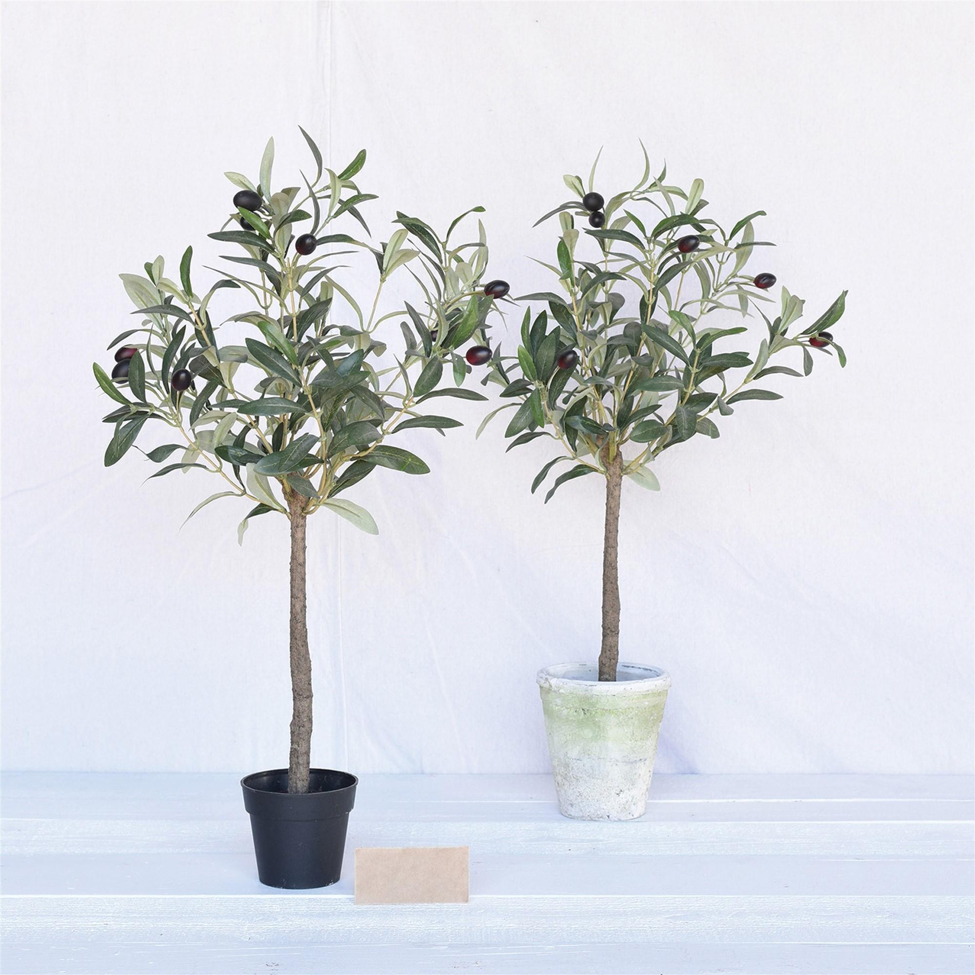 Ajoutez de l'engrais pour obtenir de magnifiques oliviers.