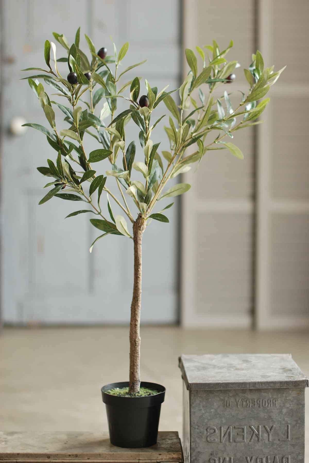 Les oliviers sont naturellement utilisés pour les sols pauvres et caillouteux.