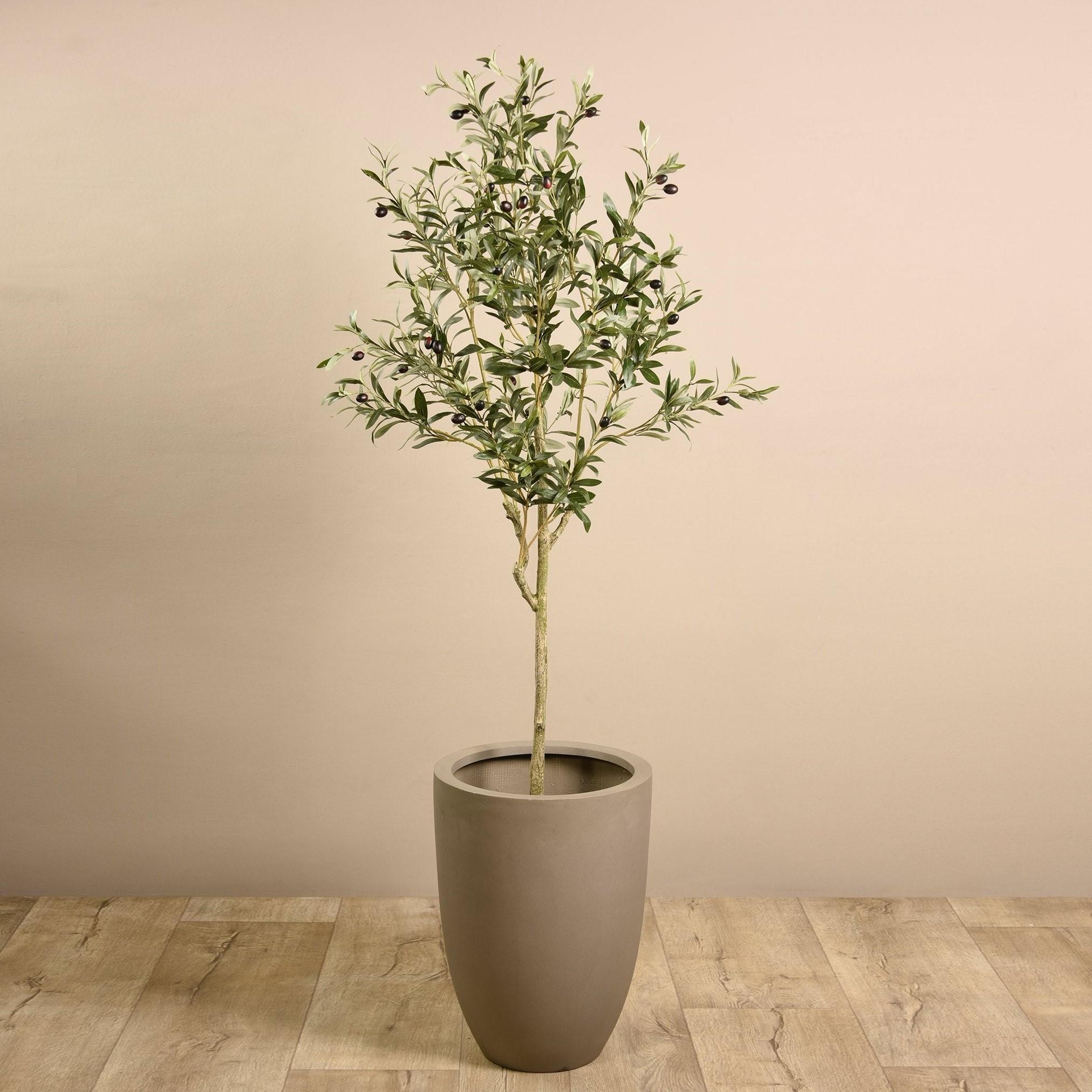 Si votre olive est dans un pot, nous vous recommandons de la mettre à l'abri (par exemple un jardin d'hiver ou une serre).