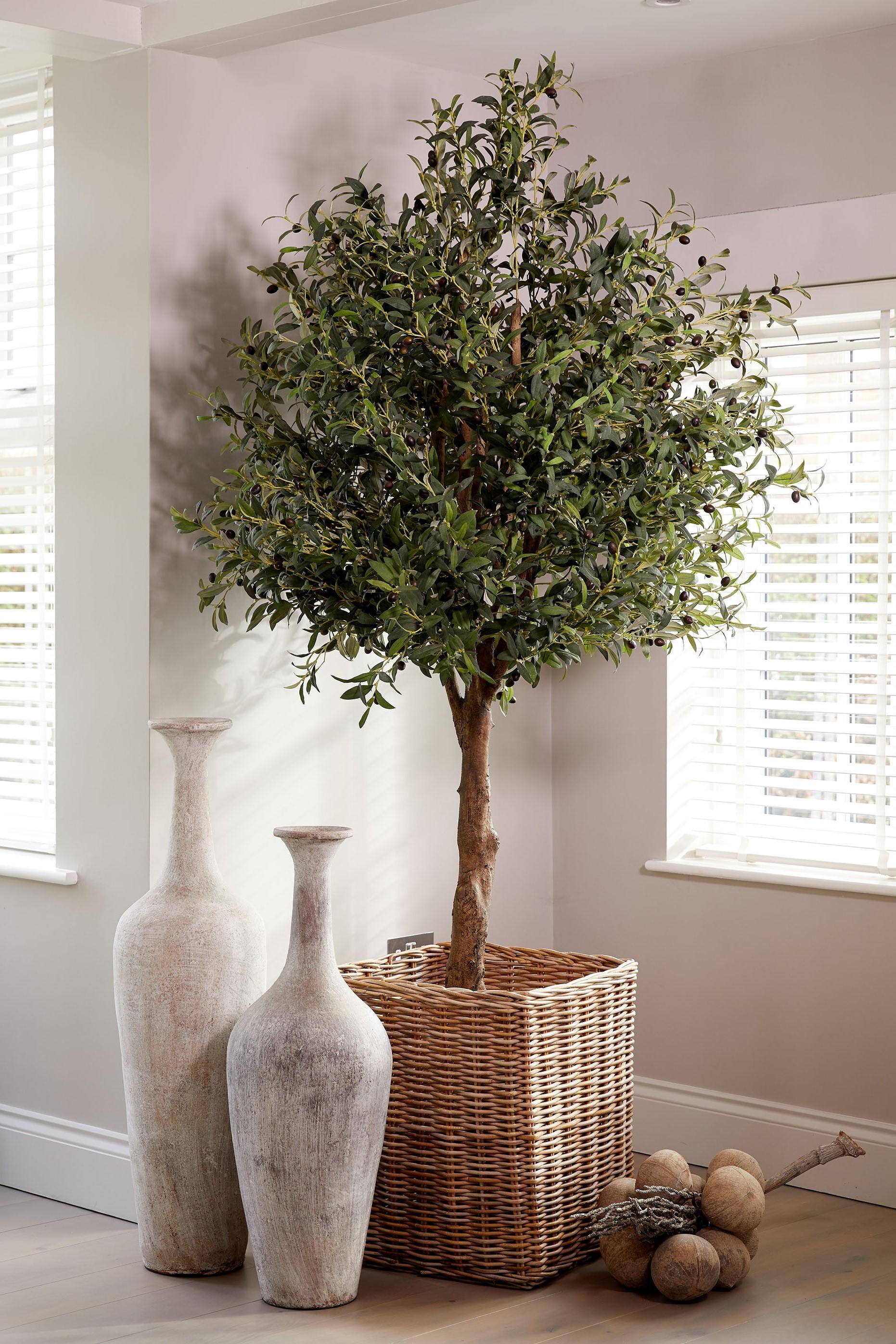 Les oliviers sont enchanteurs, leur nom évoque toujours des images de la Provence et de la Méditerranée!