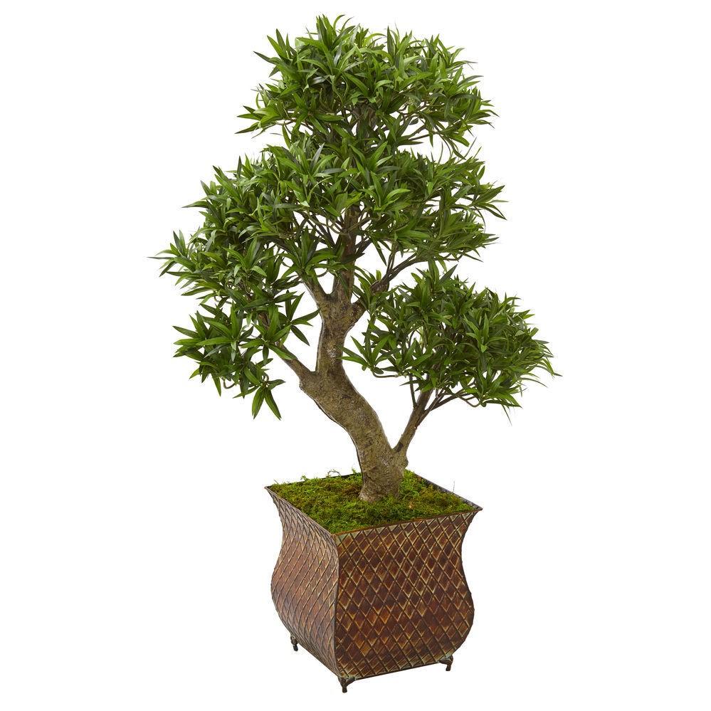 Le prix d'un bonsaï peut varier en fonction de la qualité de l'arbre.