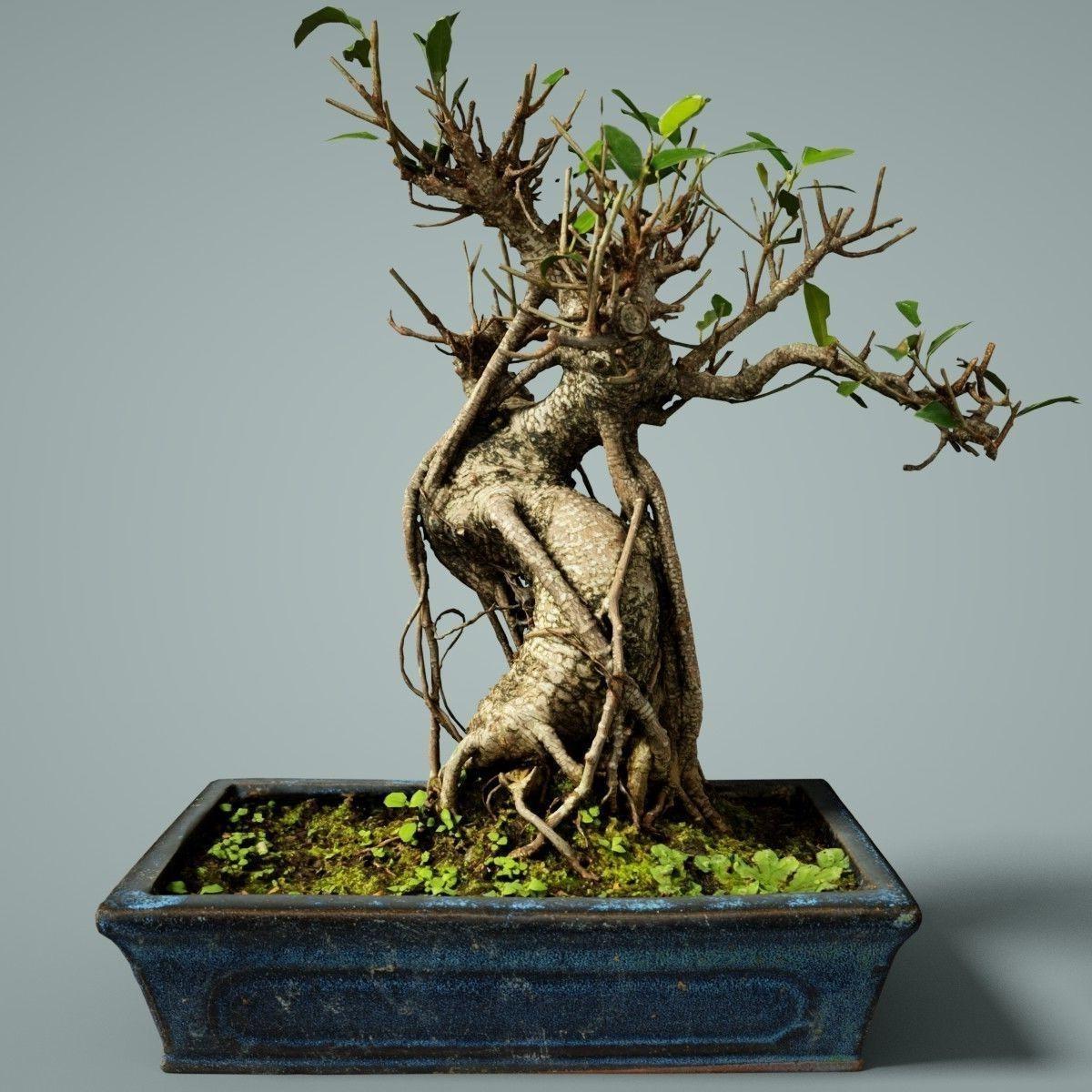 Lors de la Convention internationale du bonsaï de 2012, le prix d'un bonsaï a été estimé à 100 millions de yens, soit un peu moins d'un million de dollars.
