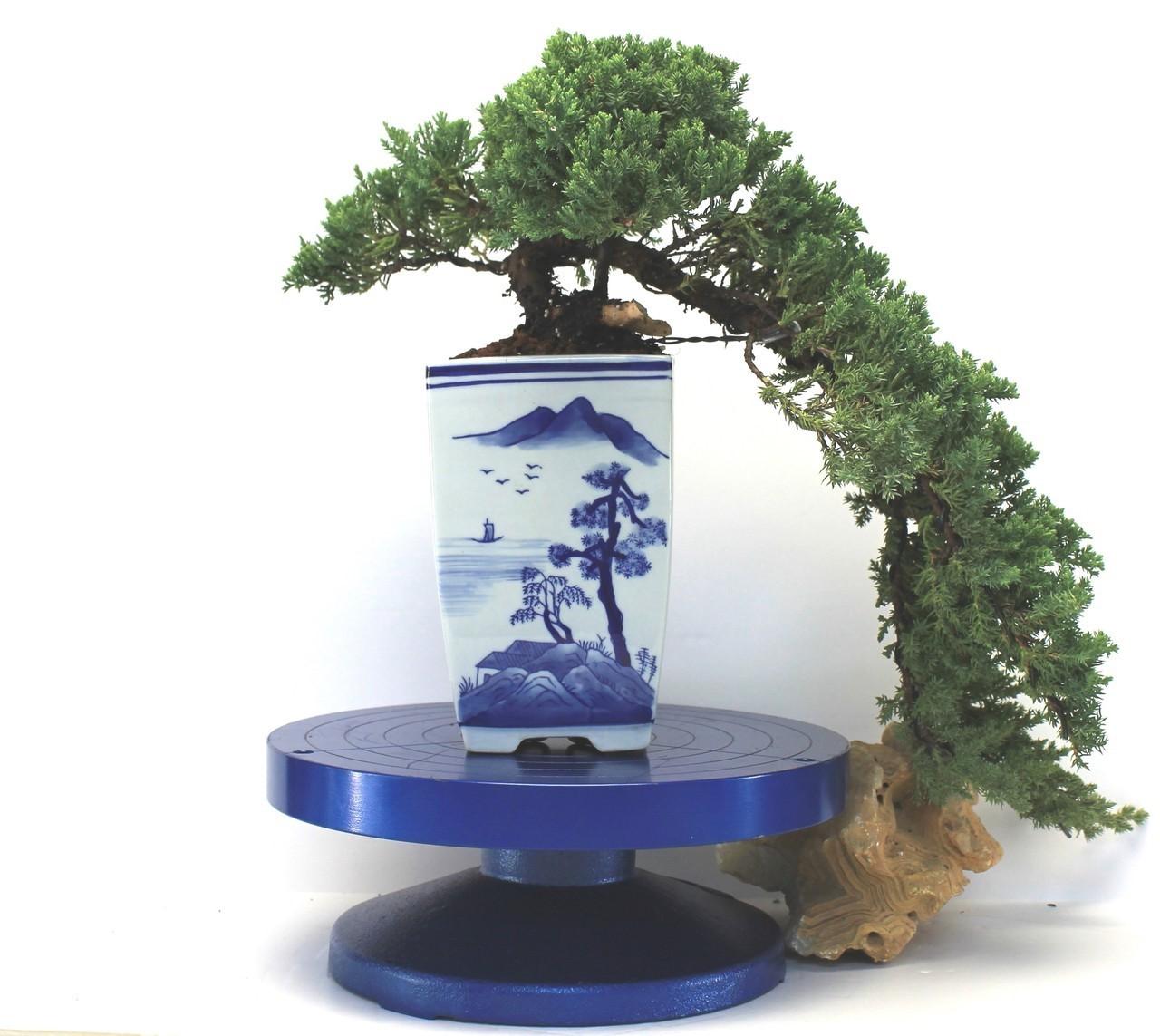 Originaire de Chine, la pratique de la création de minuscules arbres et paysages est apparue dès le VIe siècle.