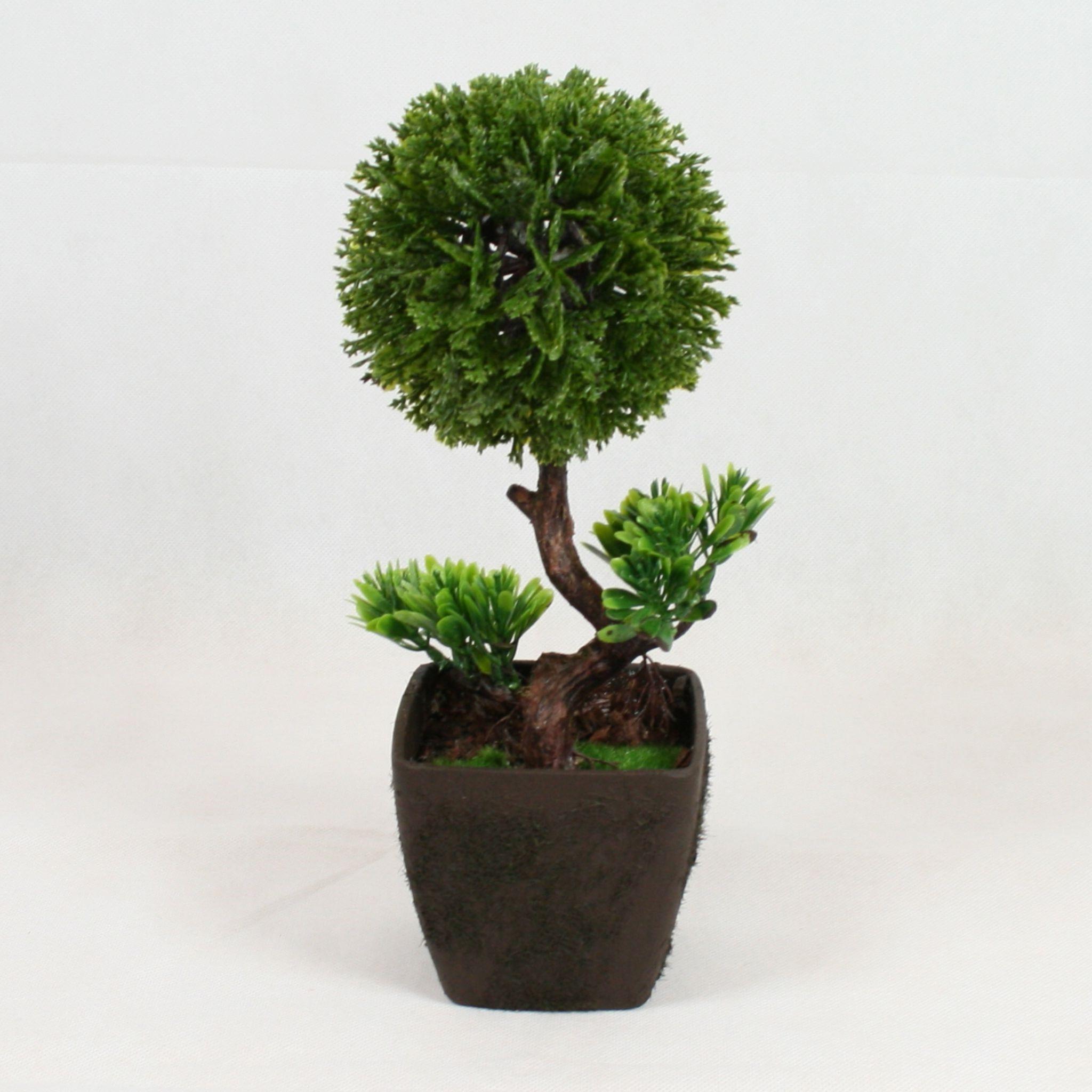 Le prix d'un bonsaï dépend beaucoup des techniques utilisées lors de la croissance de l'arbre.
