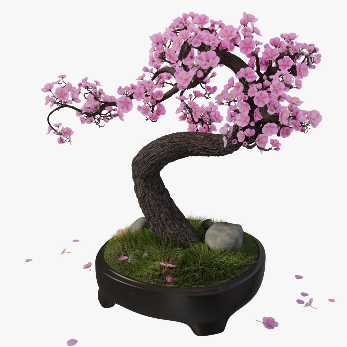Les bonsaïs peuvent coûter très cher.