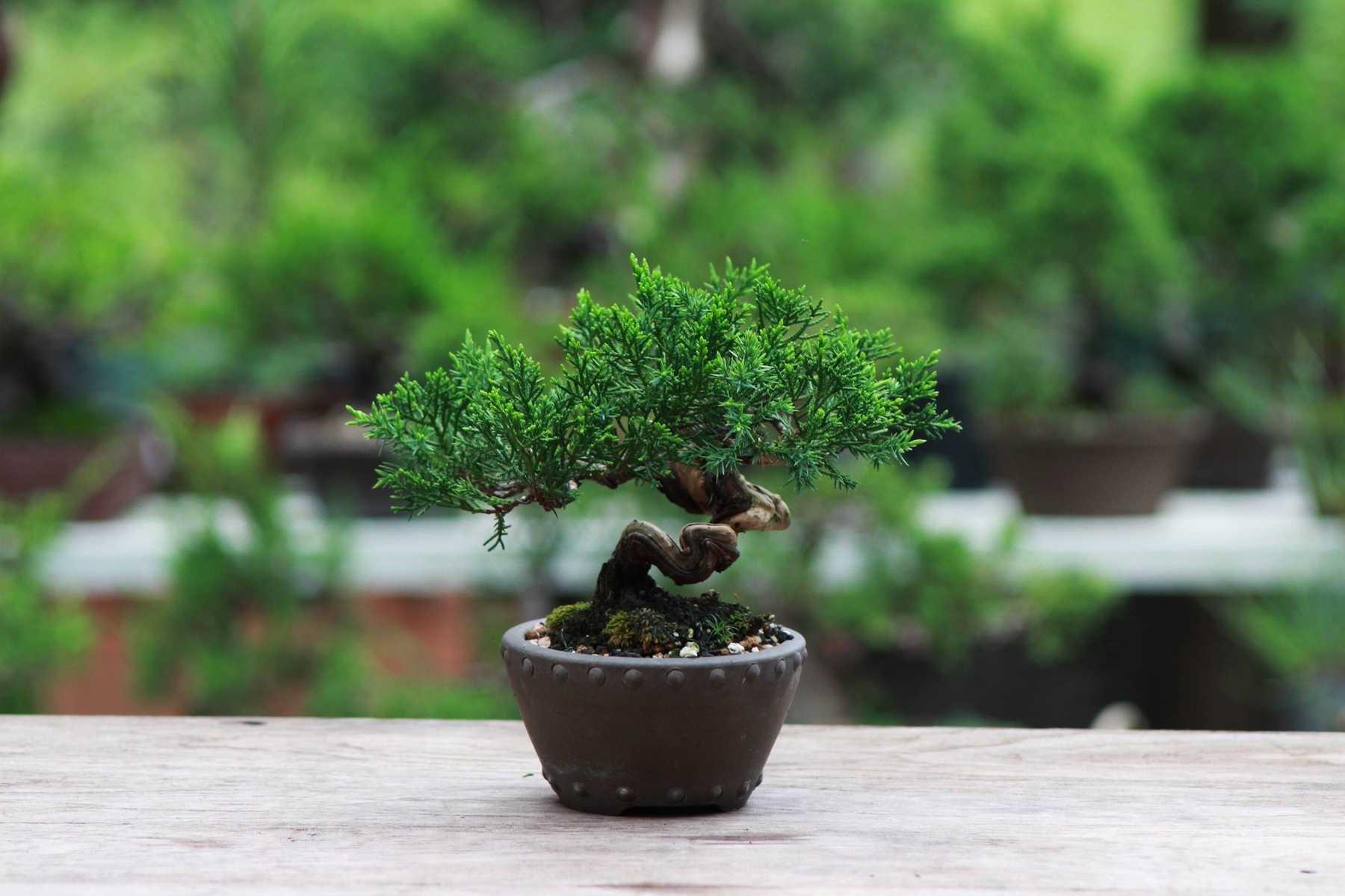 Choisissez donc judicieusement lors de l'achat de ce type d'arbre pour votre maison.