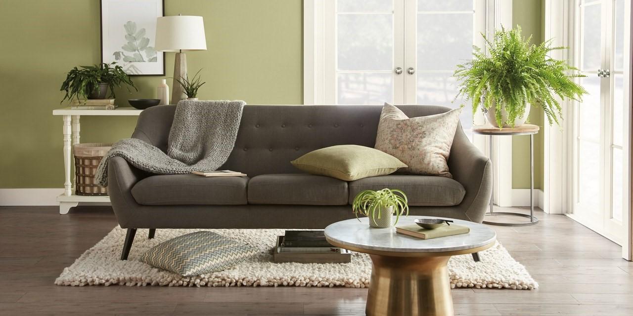Les plantes peuvent contribuer à l'esthétique organique de votre maison tout en favorisant une ambiance propre et respectueuse de l'environnement.