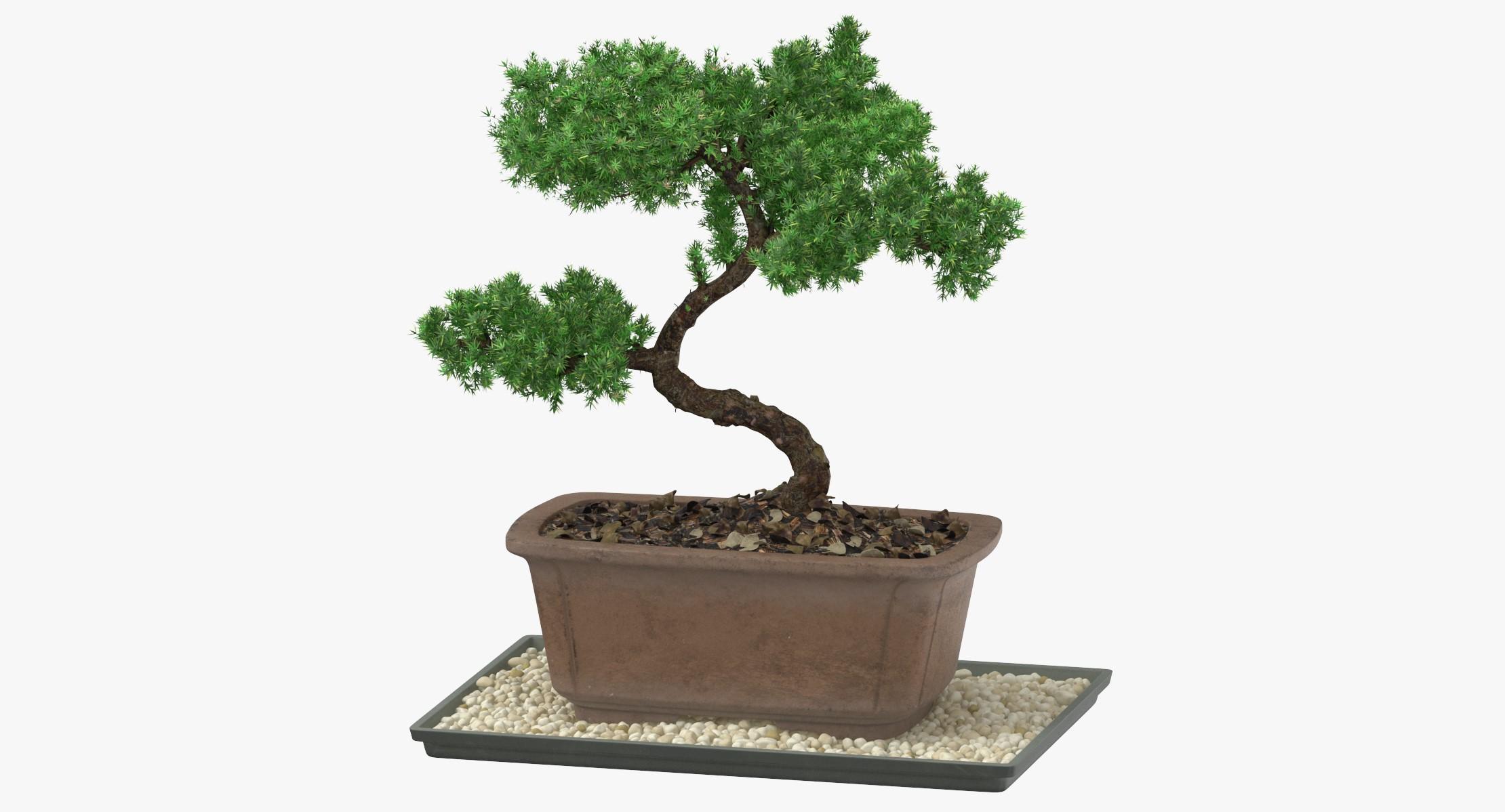 Achat de bonsaï: Même lorsque vous avez une fenêtre orientée au sud, il est probable que l'intensité de la lumière soit encore trop faible.