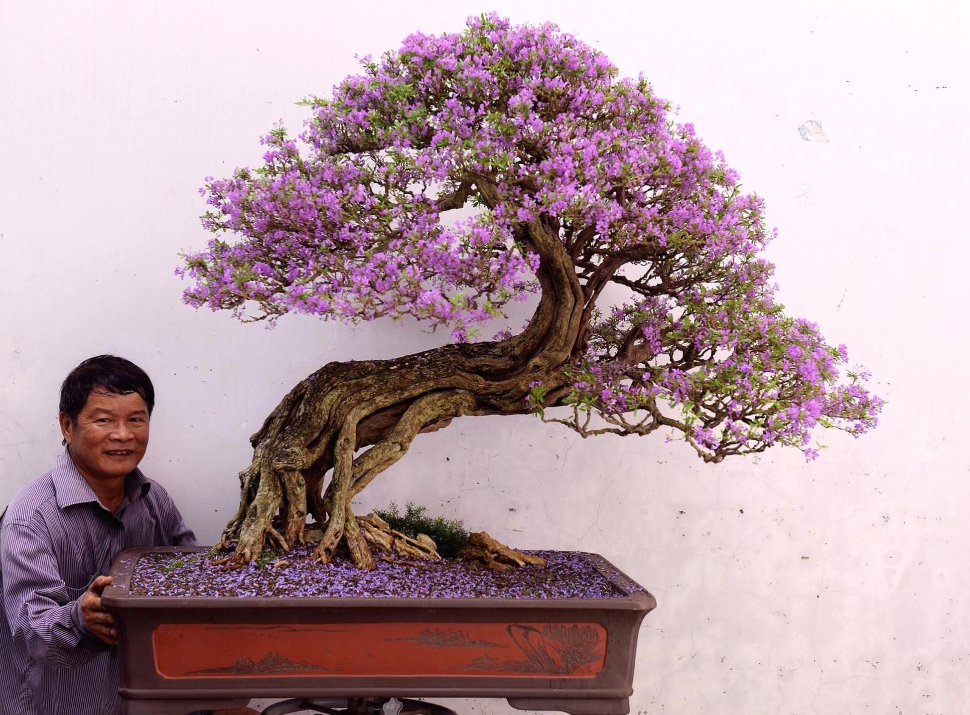 Les bonsaï subtropicaux peuvent résister à des températures un peu plus basses.