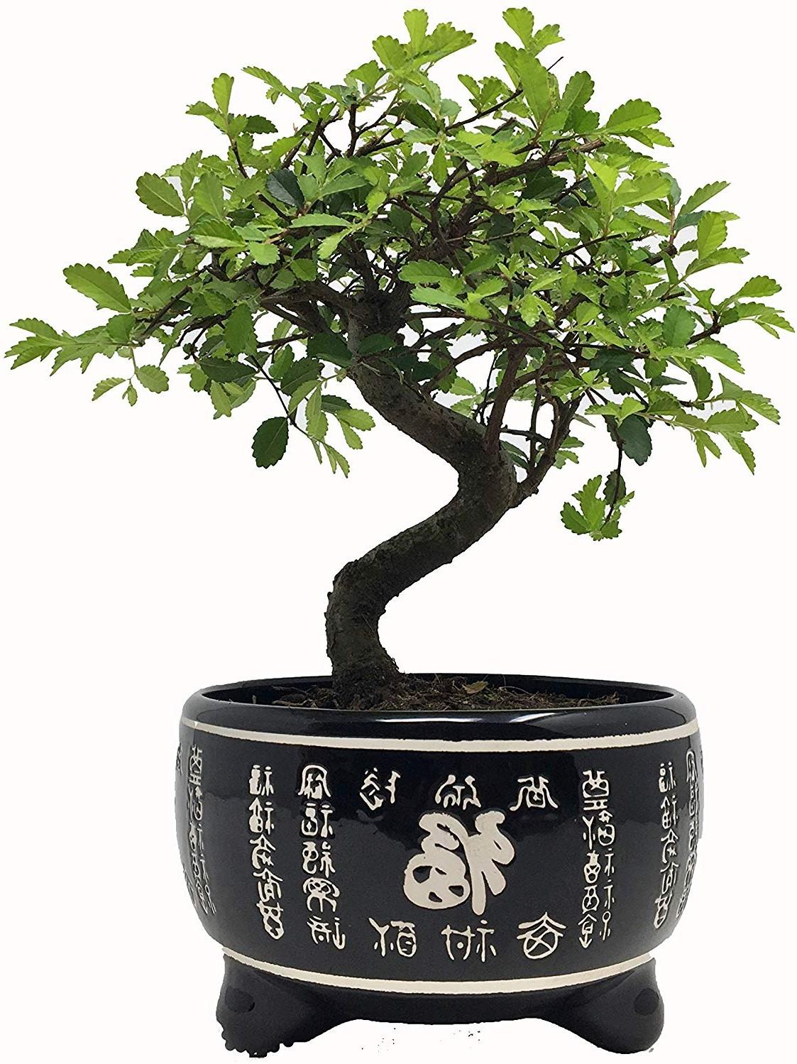 En fait, la plupart des bonsaï devraient être placés à l'extérieur, où ils sont exposés aux quatre saisons, tout comme les arbres normaux.