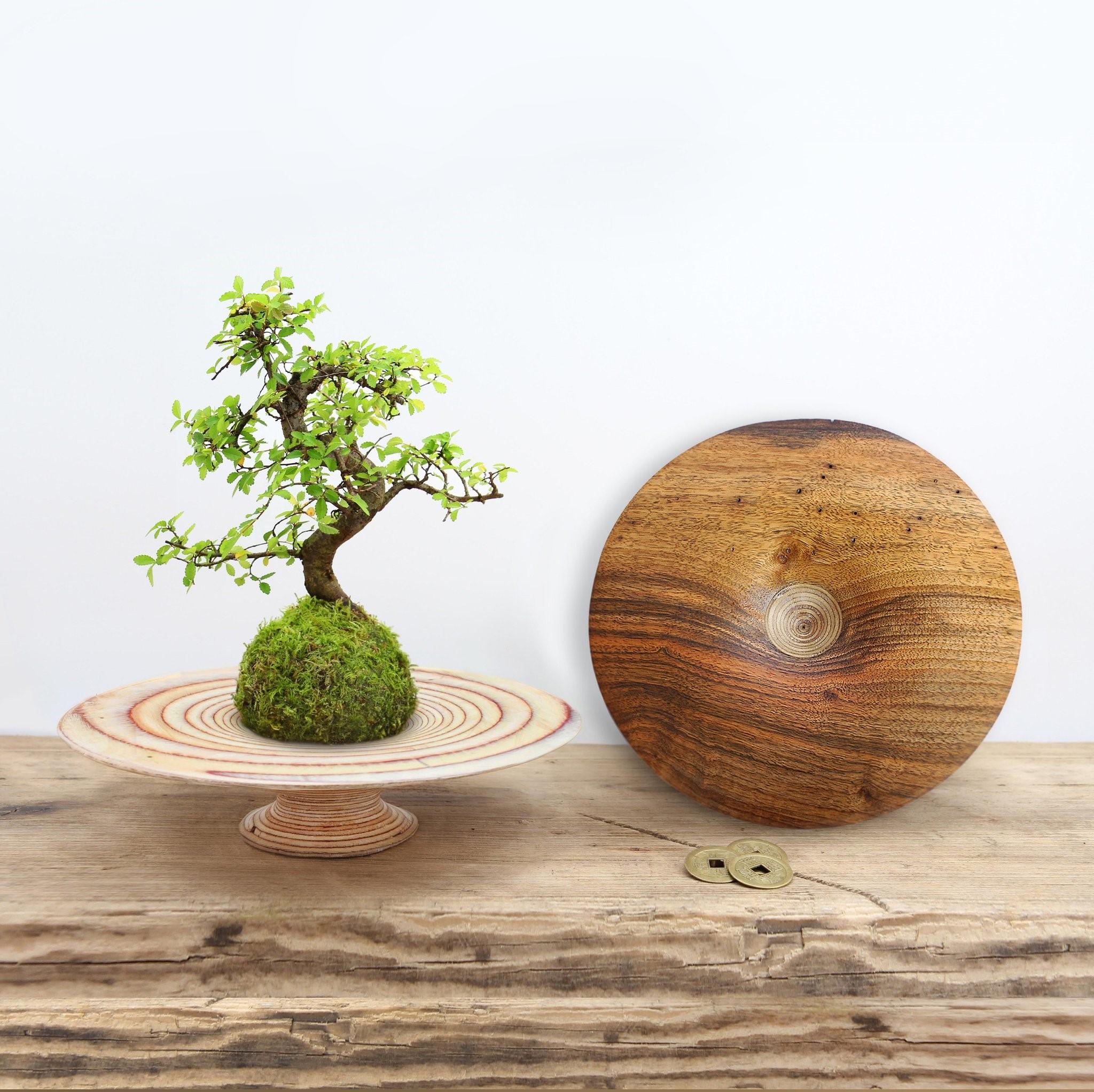Continuez à observer vos arbres individuellement, au lieu de les arroser quotidiennement.