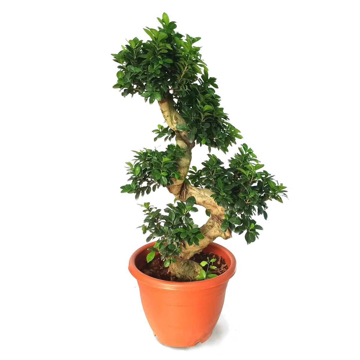 Cependant, lorsque l'arbre a besoin d'eau, il doit être complètement trempé pour que tout le système racinaire soit mouillé.