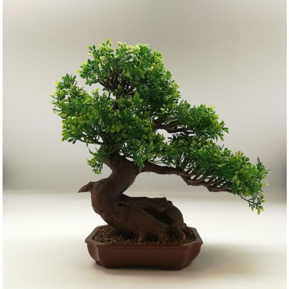 Il existe plusieurs arbres que vous pouvez faire pousser à l'intérieur, mais de loin le plus commun (et le plus facile à entretenir) est le ficus.