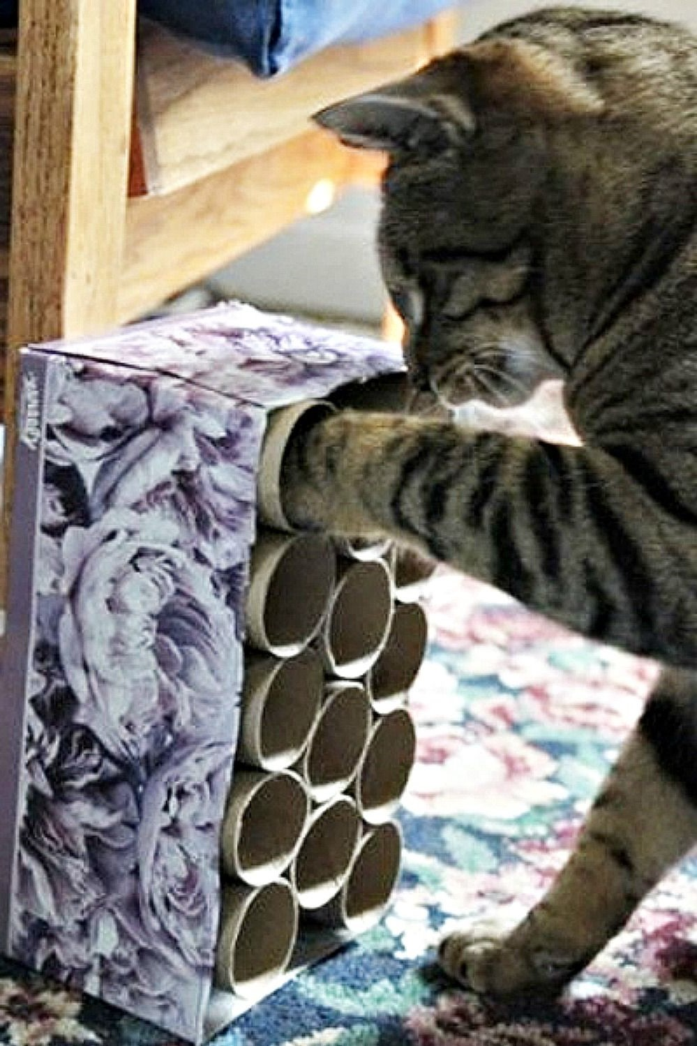 Voyez votre chat s'amuser avec ce jouet bricolage facile.
