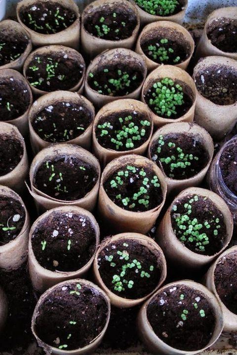 Jardinière de semences DIY.