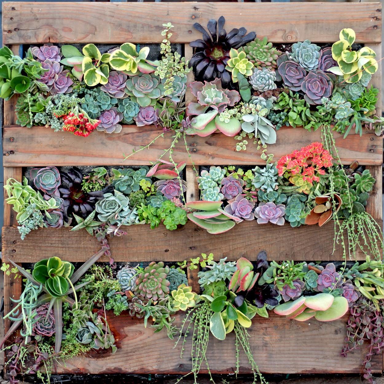 Jardin vertical avec plantes succulentes.