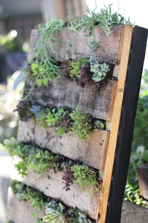 Mur végétal en palette bricolage.