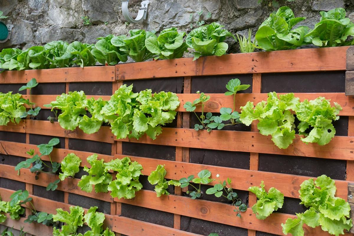 Comment réaliser un jardin vertical en palette?