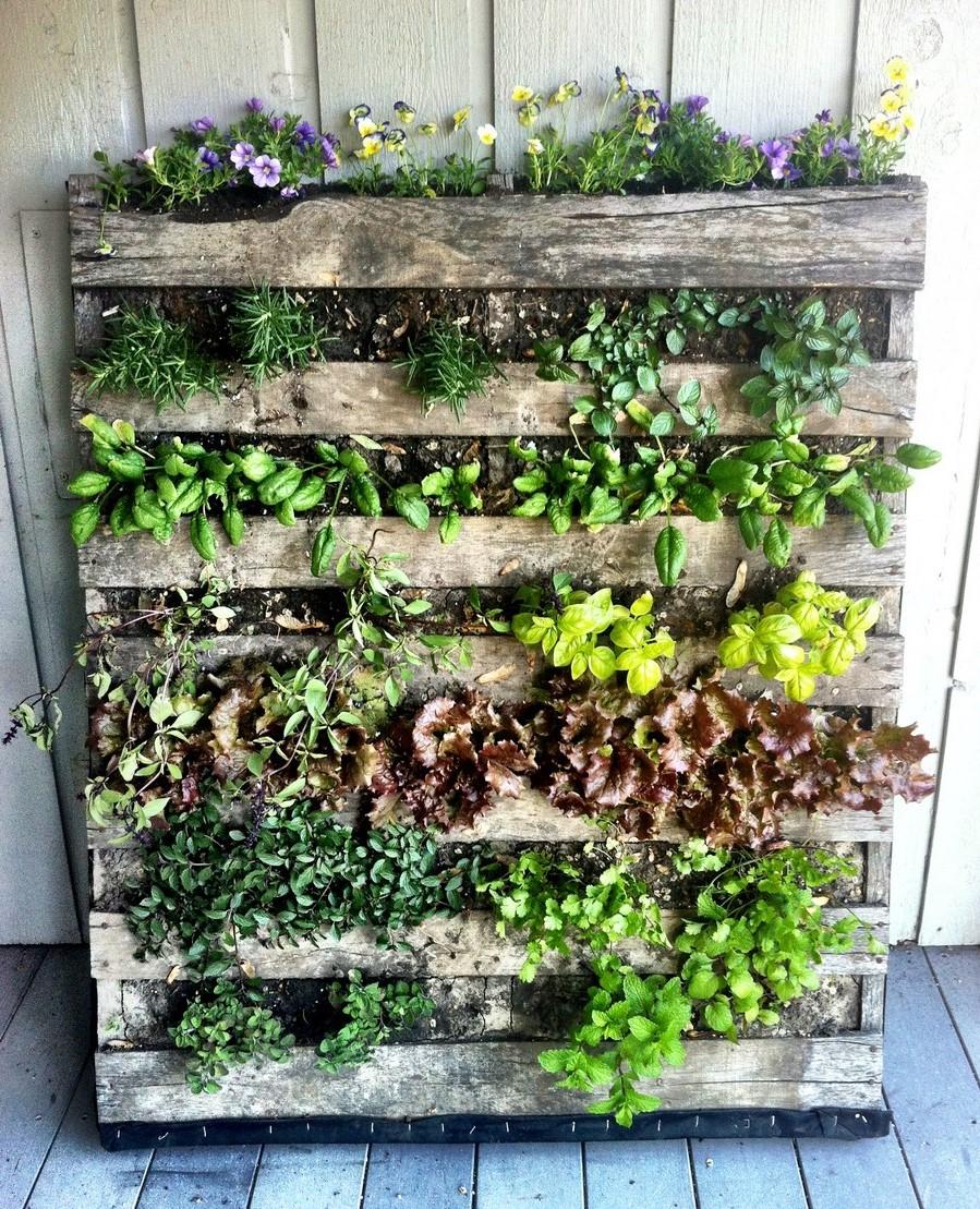 Mur végétal en palette DIY.