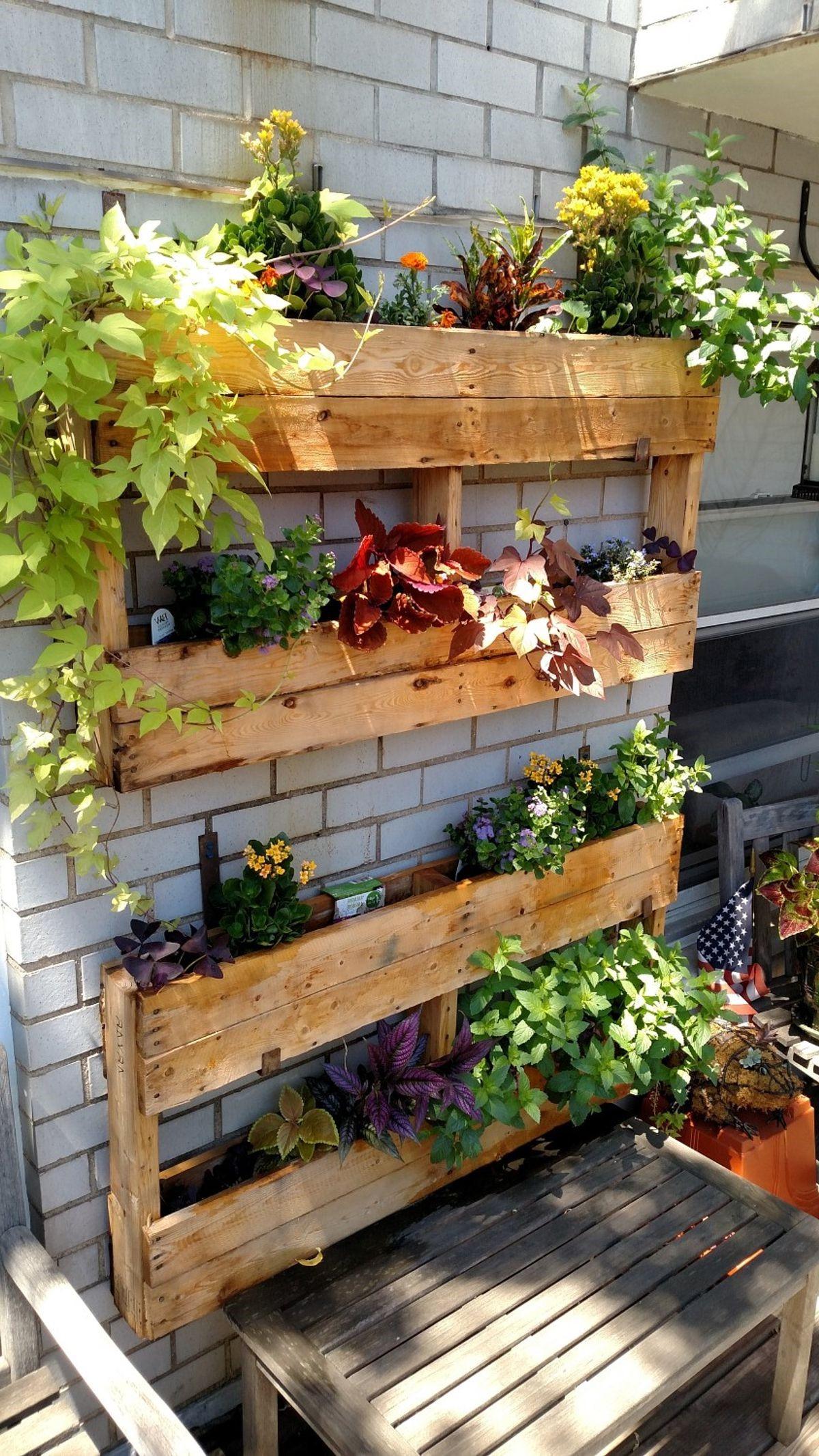 Jardin vertical en palettes.