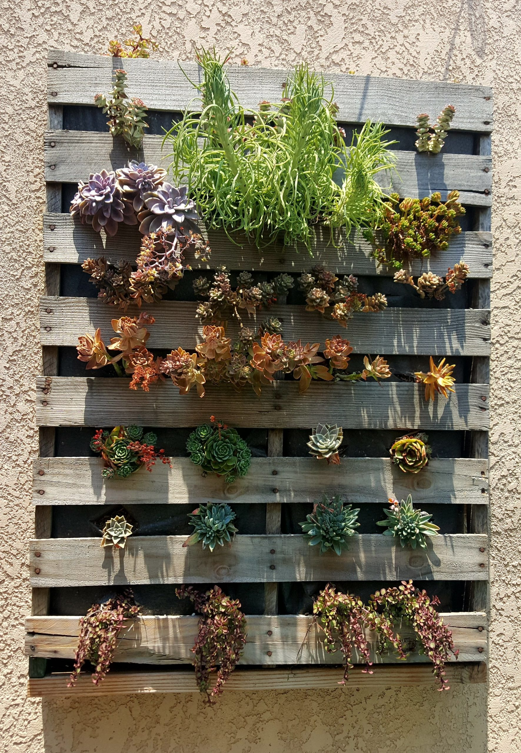 Jardin en palettes DIY.