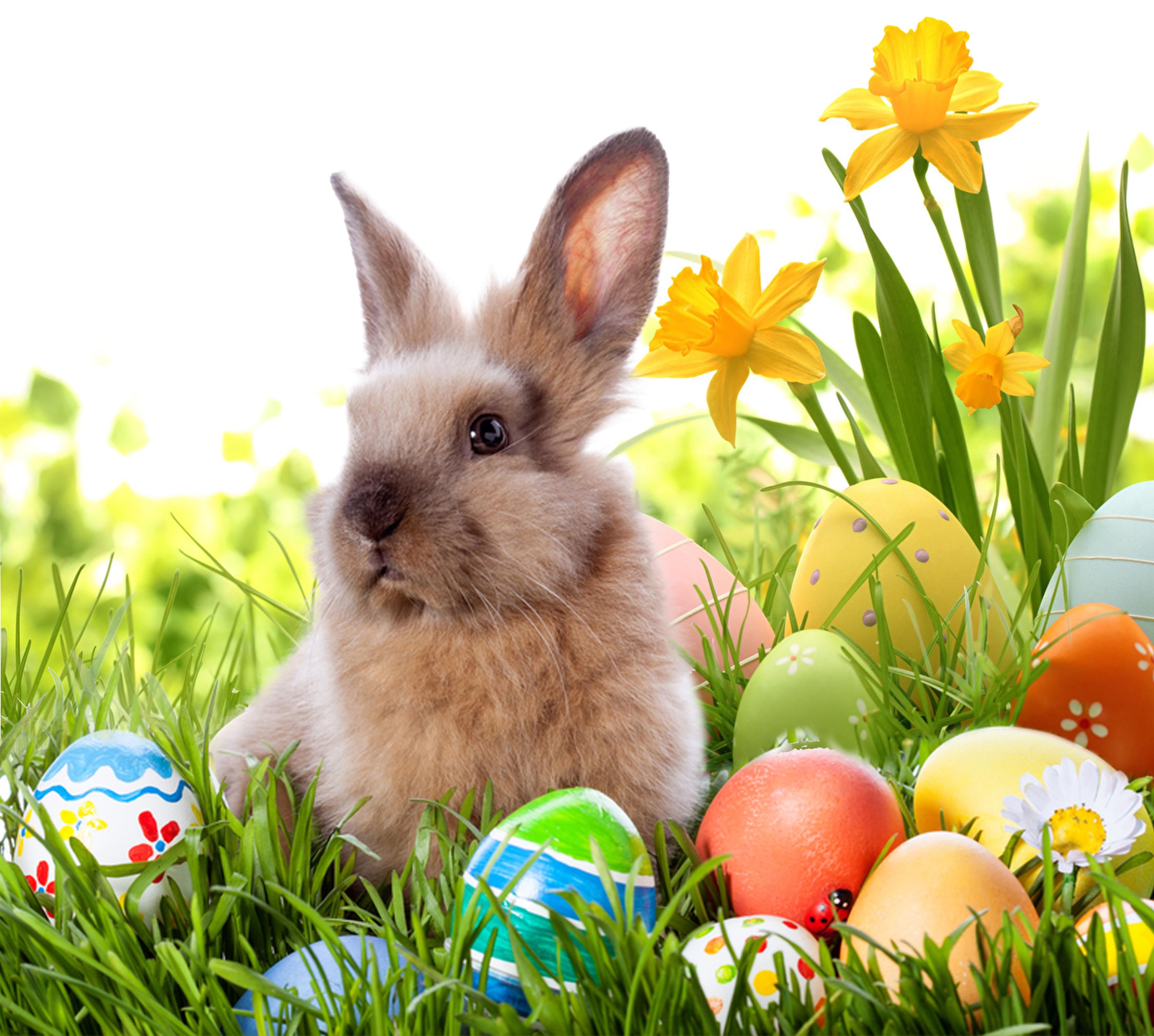 Idée déco pour Pâques à l'extérieur - lapin et oeufs